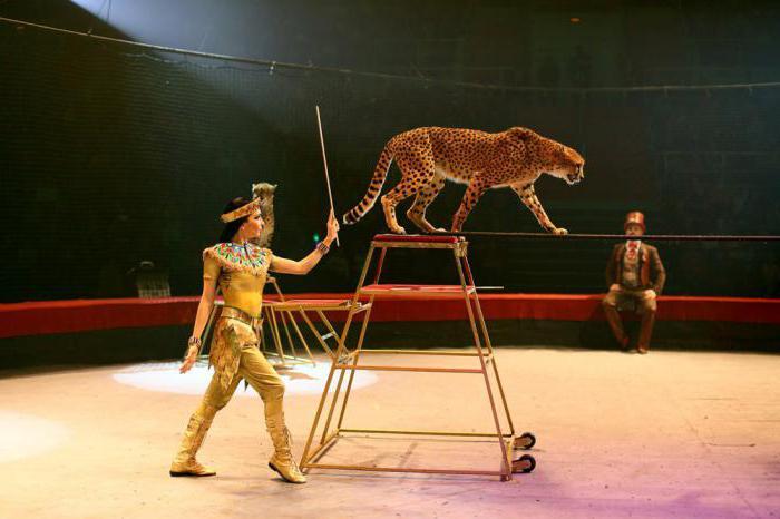 цирк дарьи костюк