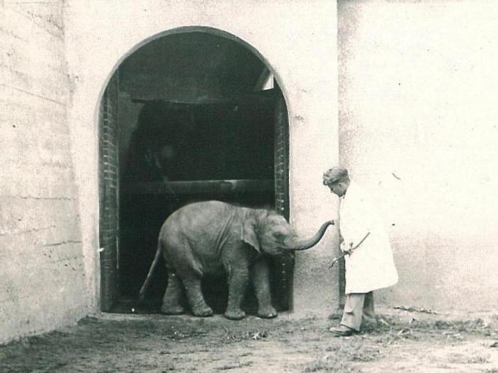 варшавский зоопарк во время войны