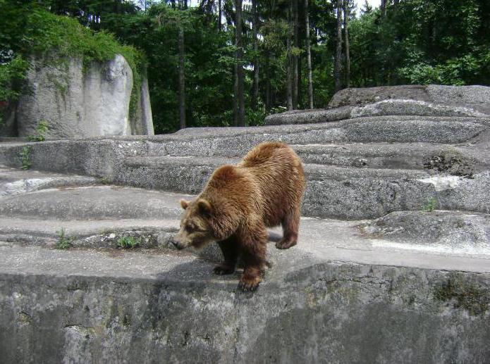 зоопарк в варшаве как добраться