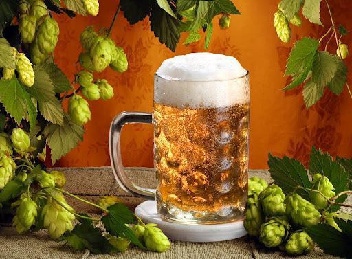 простое домашнее пиво