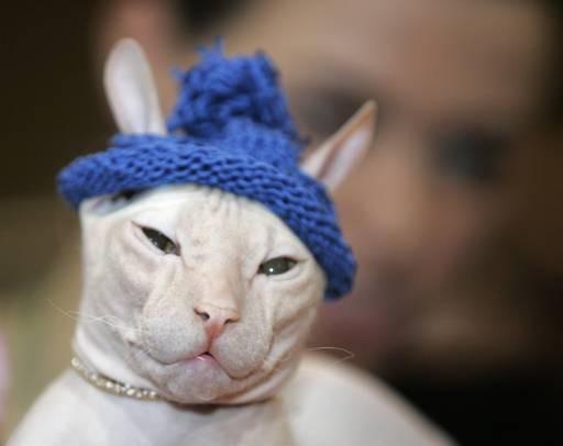 одежда для кошек сфинксов