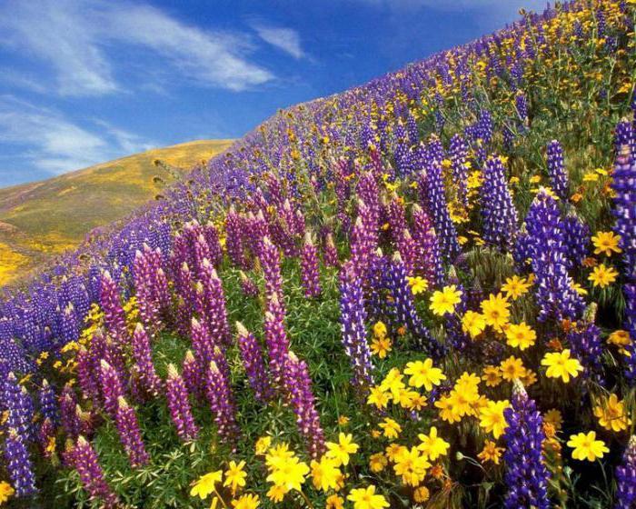 Национальный парк цветов в индии