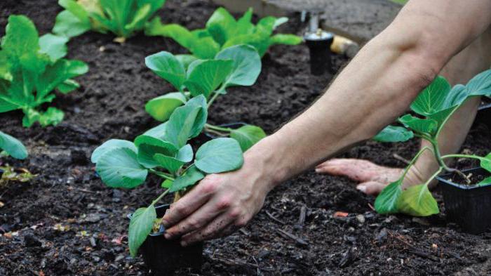 Иммуноцитофит Инструкция По Применению Для Комнатных Растений