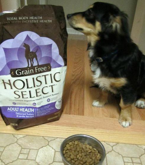 Лучшие корма холистики для собак