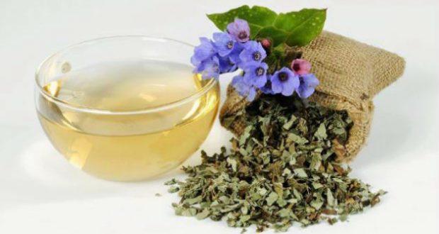 Трава медуница: лечебные свойства и противопоказания, описание, заготовка, способы применения