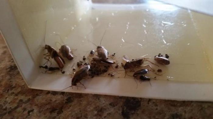 самый лучший отпугиватель тараканов отзывы
