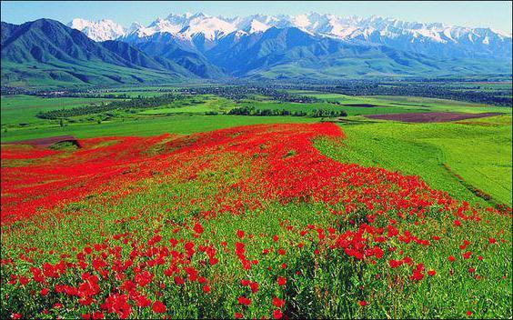 крупнейшие горные системы и хребты России