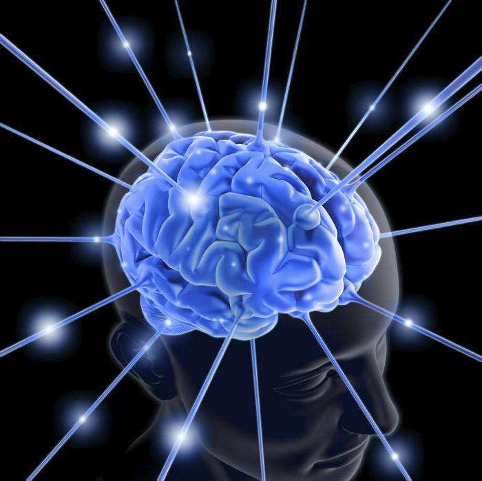 Отделы среднего мозга