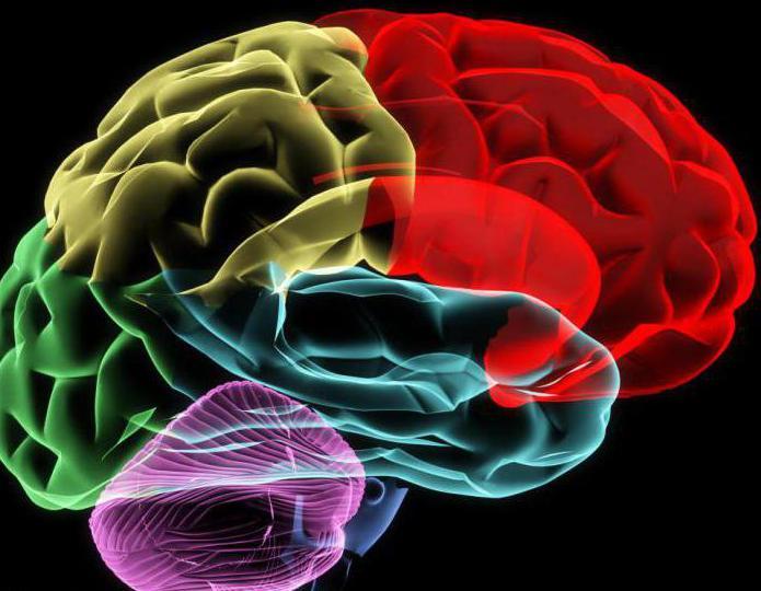 Водопровод среднего мозга