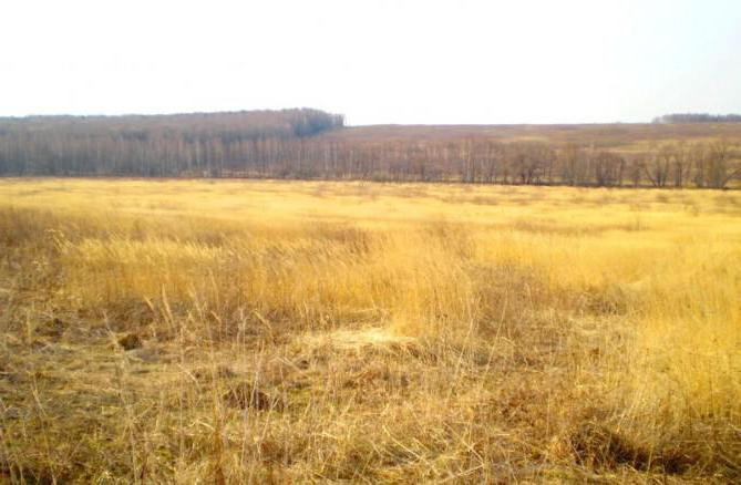 Приозерье, коттеджный поселок (Калужская область): отзывы