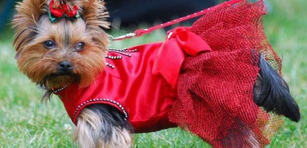 Одежда для собак йорков