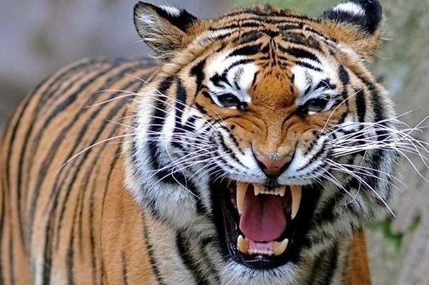 интересные факты о хищных млекопитающих