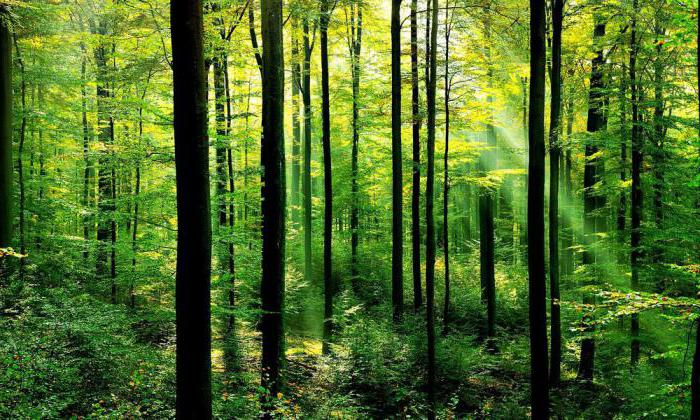 что в лесу растет