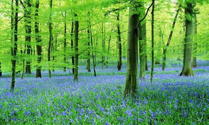 растения растущие в лесу