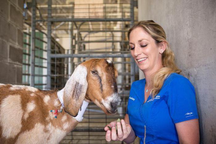спаривание козы с козлом признаки охоÑ'Ñ‹
