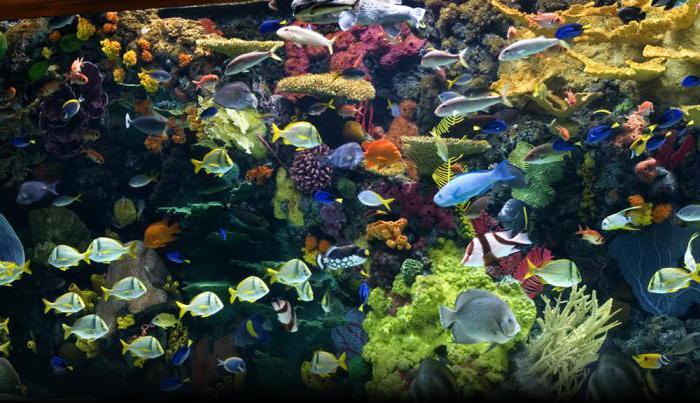 Как выбирать оборудование для аквариума?