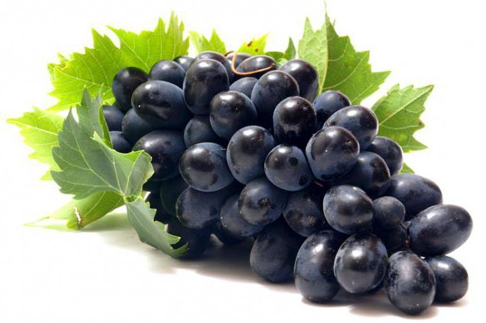 сорт винограда красень фото и описание