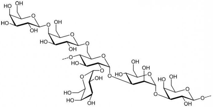 полисахарид это
