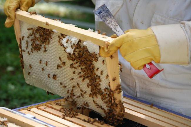 Пчеловодство изготовление ульев