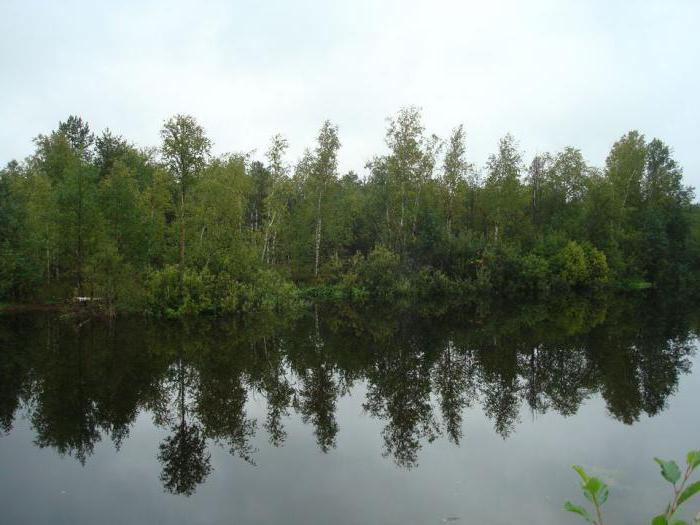 план рассказа васюткино озеро