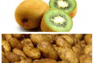 картофель сорт киви описание сорта