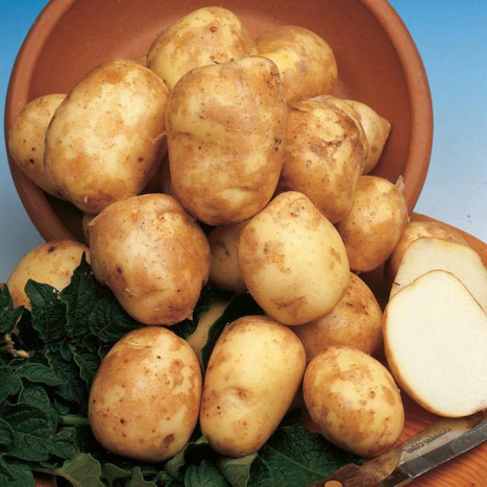 картофель киви описание сорта отзывы