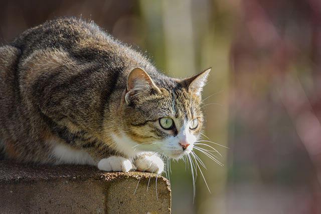Моё написать сочинение про любимого кота