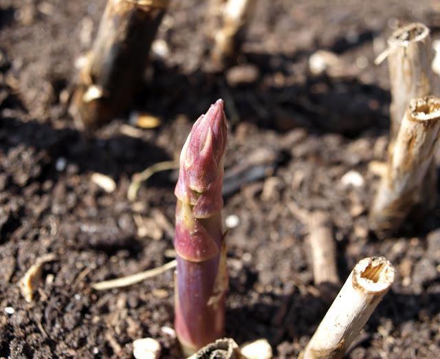 стратификация семян малины