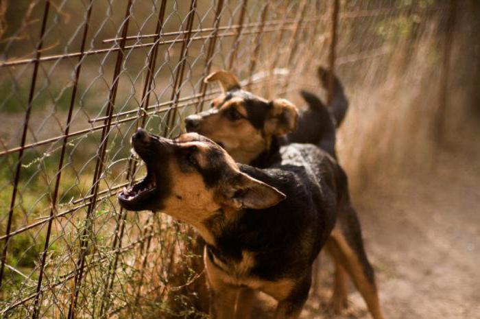 собаки лают караван идет смысл этой пословицы