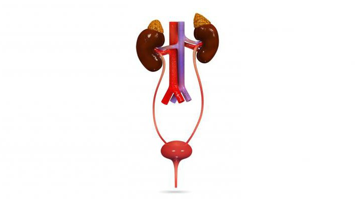 системы органов у плоских червей паразитов человека