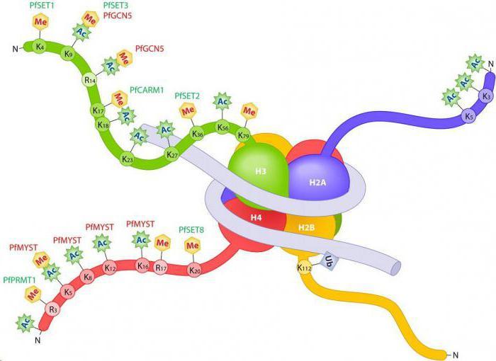 гистоновый белок