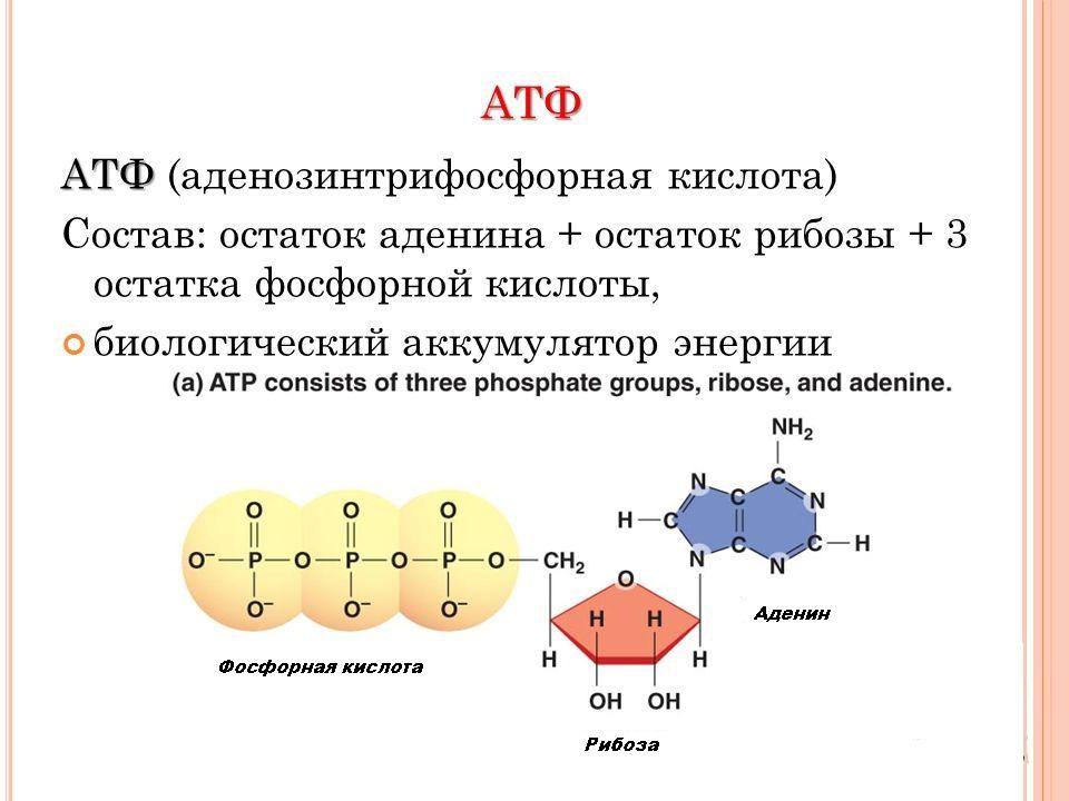 Состав АТФ