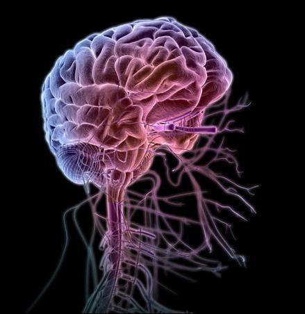 биология системы органов животных