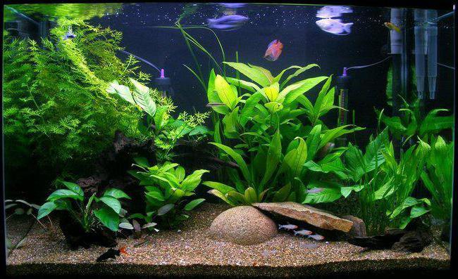 магнитные скребки для аквариума