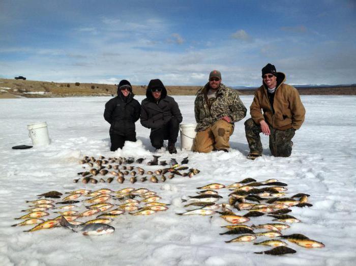 Куда посоветуете на зимнюю рыбалку поехать в дельту Волги
