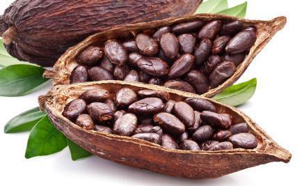 Какао. Полезные свойства и противопоказания