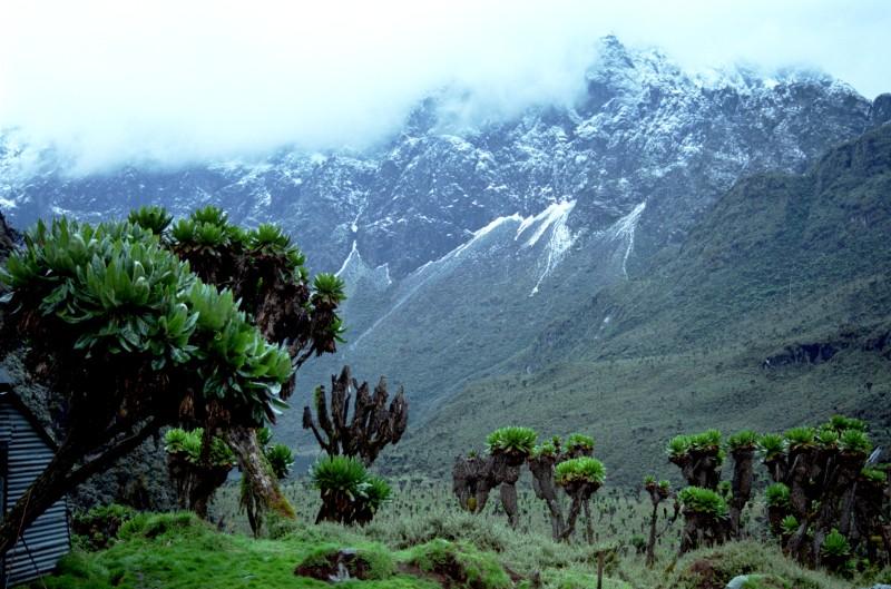 растительность в горах африки