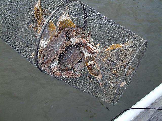 рыболовные сети верши