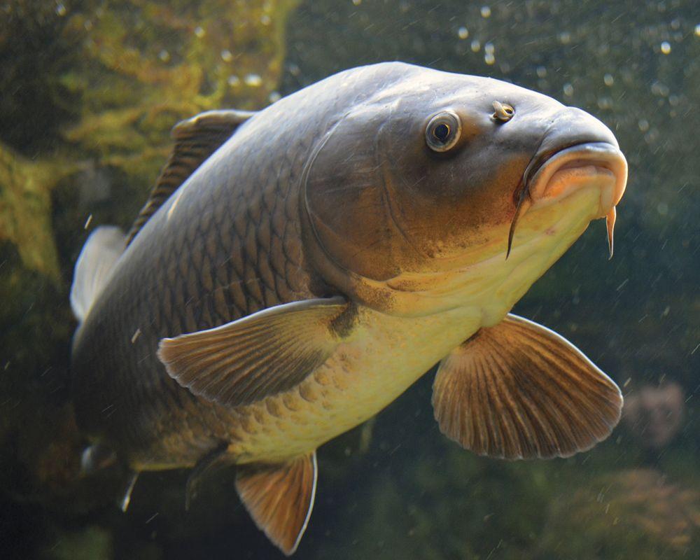 10 лучших фирм рыболовных лесок рейтинг топ 10