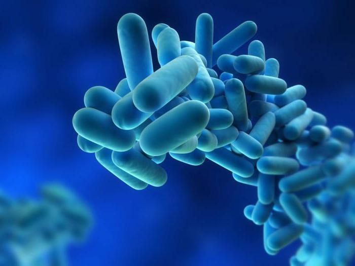 Способы размножения бактерий 13