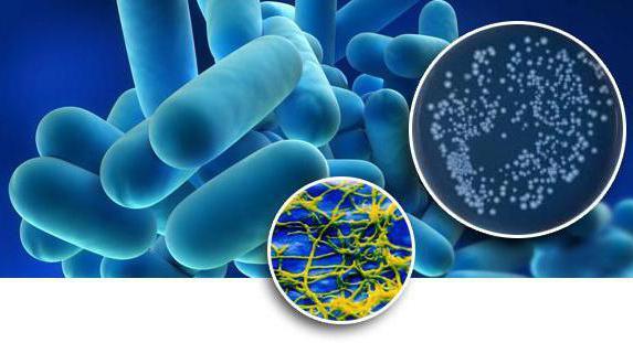Способы размножения бактерий 14