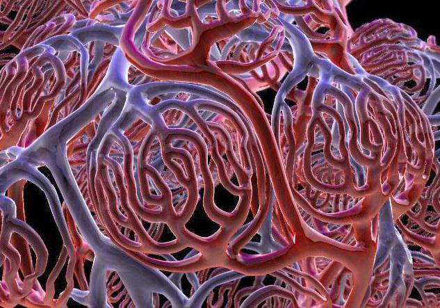 Чем отличаются вены от артерий