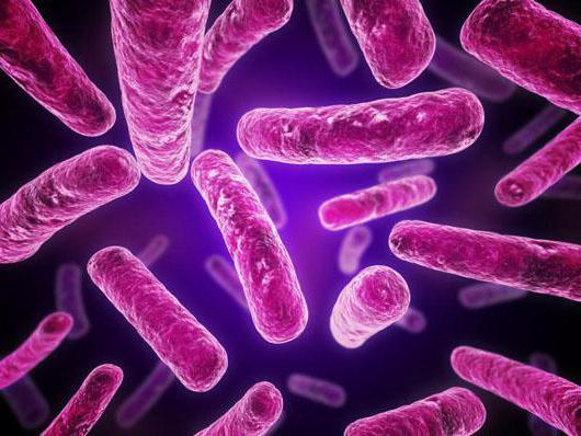 сходство бактериальной и растительной клетки