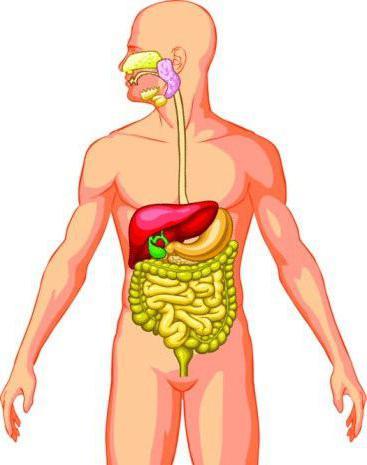 Система органов незаменимая для организма