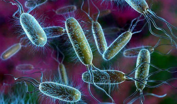 что общего у растительной и бактериальной клетки