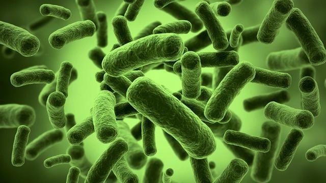 клетки бактерий отличаются от растительных клеток не имеют