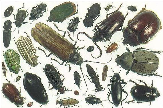 полное и неполное превращение насекомых