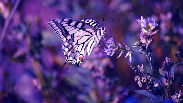 развитие насекомых с полным превращением