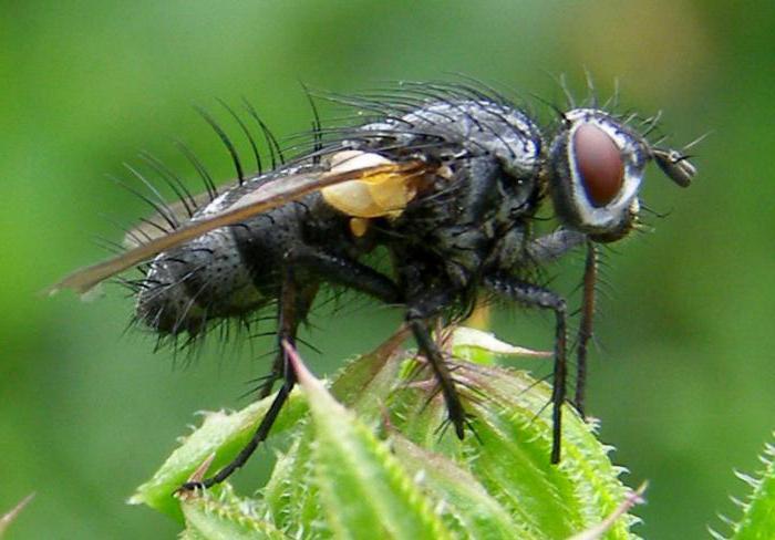 насекомые с полным превращением линяют на стадии