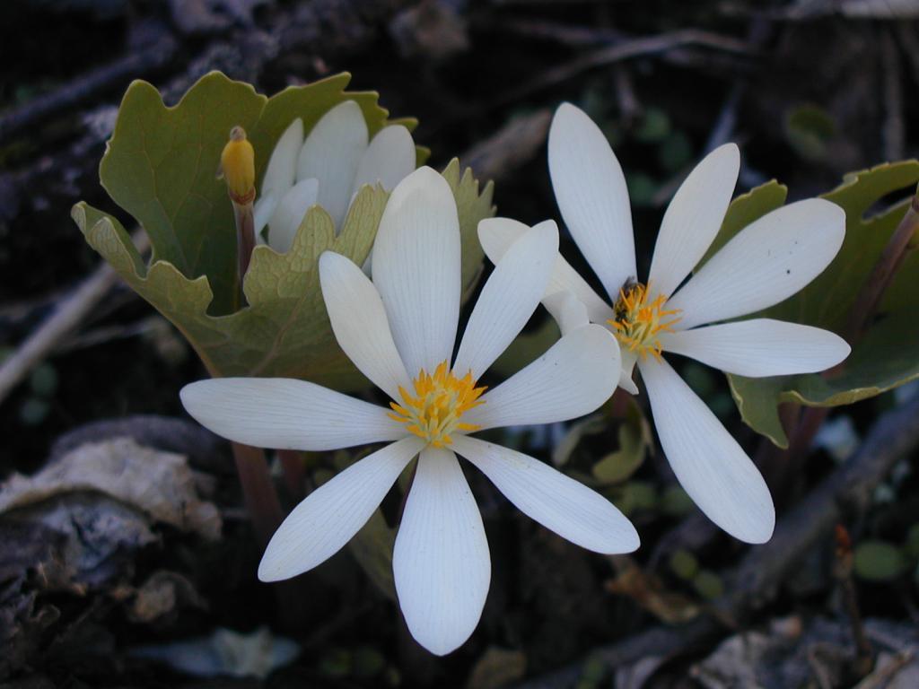 С головой в работу картинки шмель в цветке первого